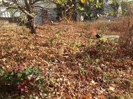 garden late fall1