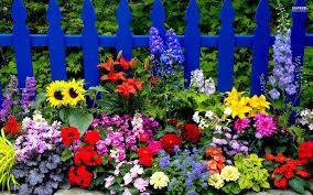 garden summer2