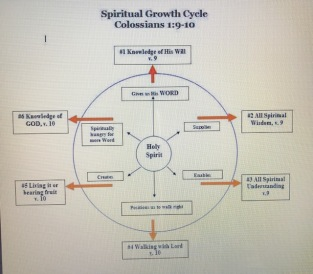 Life Cycle Christian
